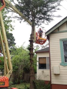 In the midst of tree removal