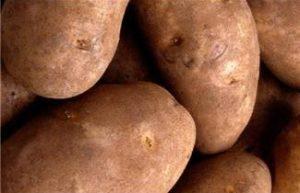 Potatoes for Christmas