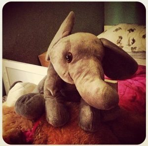 #fmsphotoaday Day 3 - Elle the Elephant