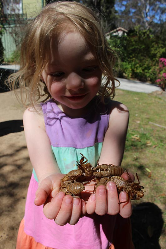 Cicadas to play with. Will they like the fairy house I have built?