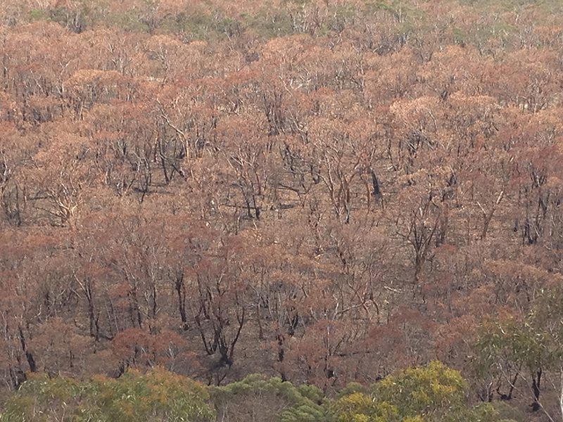 Trees that got burnt in the bush fire