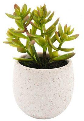 Succulent in a Sedum Pot $19.95 at Super Amart