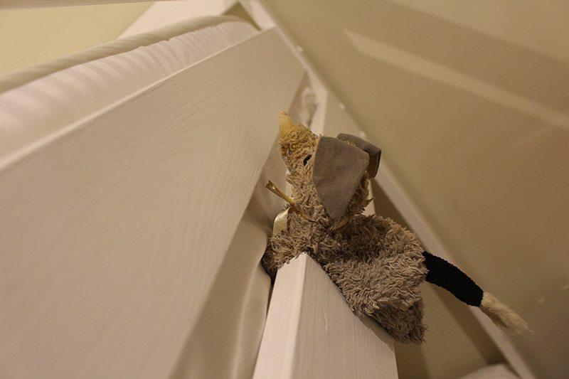 Mac Packa can climb a bunk bed