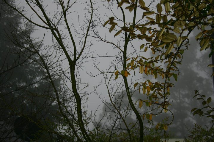 Foggy Day in the Blue Mountains