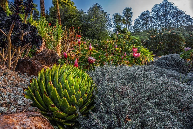 Blue Mountains Botanic Garden, Mount Tomah. Image by David Hill