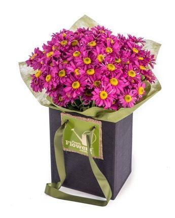 Friendly Days - Purple Chrysanthemums In Upright Black Presentation Box
