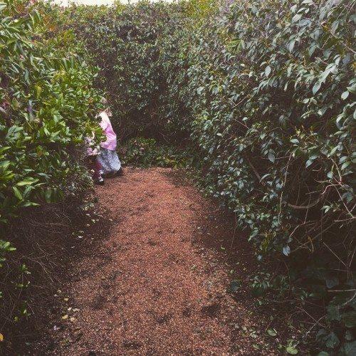 The kids racing around The Tangled Maze.