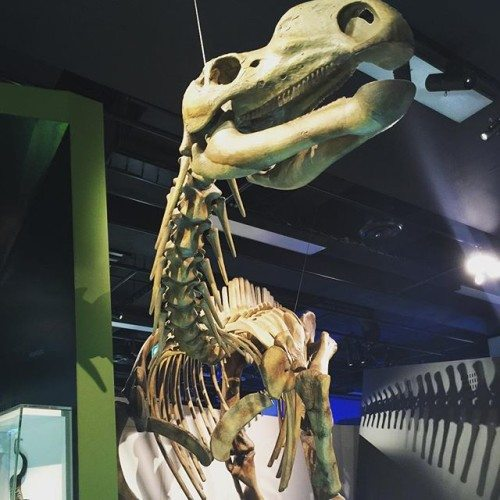 Dinosaur Bones at The Melbourne Muesum
