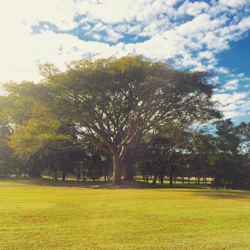 The grounds at RACV Royal Pines on the Gold Coast