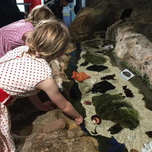 The girls having fun at the discovery rockpool at the aquarium