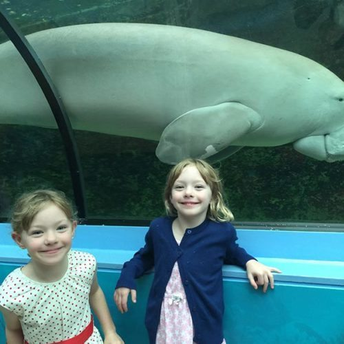 One of the dugongs at Sydney Aquarium