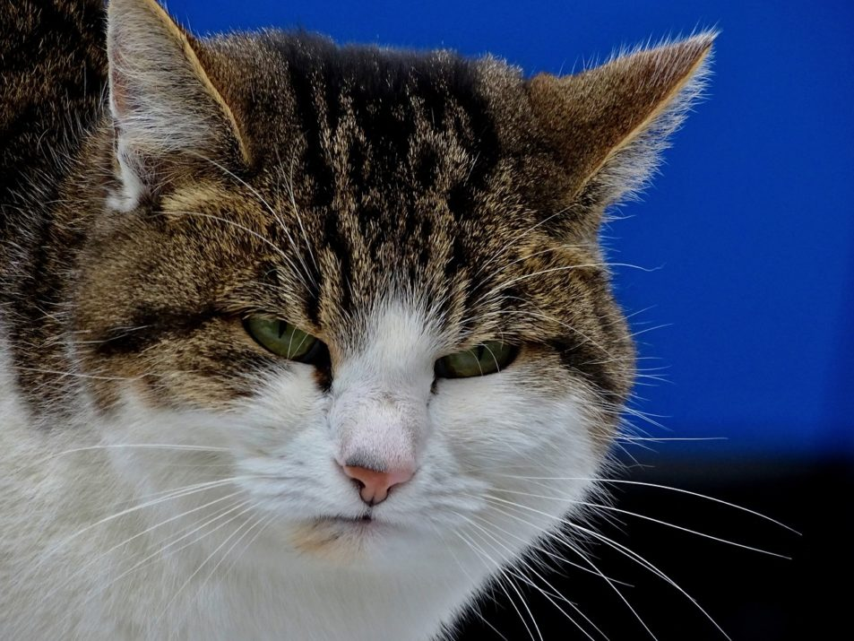 I know a cat photo is strange to put in this post. I did look for a photo of an annoyed mum or parent. Or even kids being silly. I thought that this annoyed cat summed up my feelings and might even represent some of my facial expressions over the holidays.