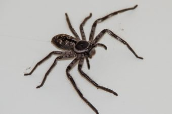 Are Spiders Plotting To Kill Me?