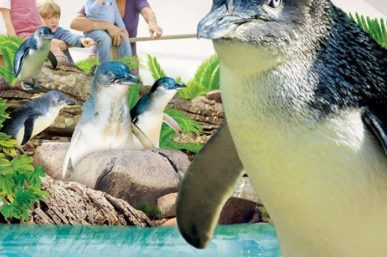 Win Family Tickets to Manly SEALIFE Sanctuary
