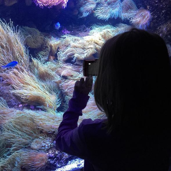 Julia loved taking photos while on our adventures at SEALIFE and WILDLIFE the other day.