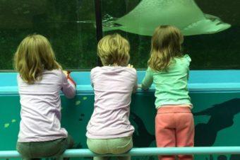 SEALIFE Aquarium & WILDLIFE Zoo Activities