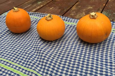 Mini Pumpkin Jack O'Lanterns