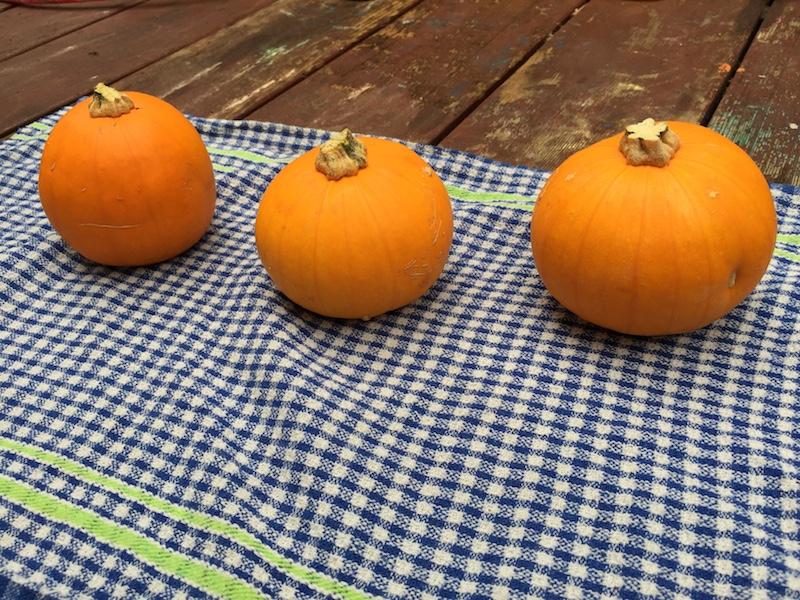 Mini Pumpkins, one for each kid.