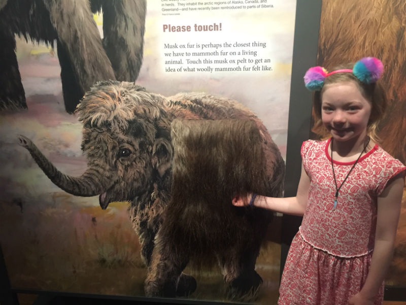 Find out what mammoth fur might have felt like. Lillian found out while we were at The Australian Museum.