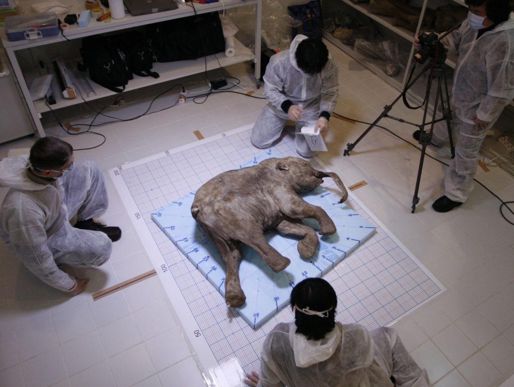Lyuba , (pronounced Lay - oo - baa ) – a 40,000 - year - old baby woolly mammoth.