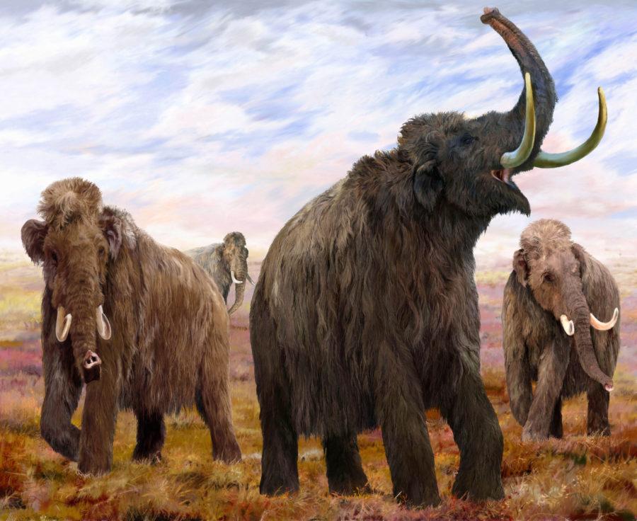 Woolly Mammoths Mural. Illustration by Velizar Simeonovski, The Field Museum.