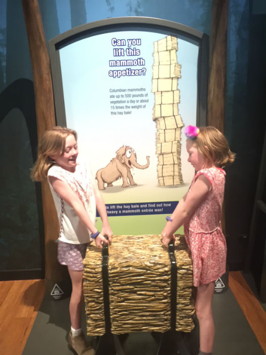 The girls tried to lift the food that a mammoth would have eaten. They found it tough to lift, even when they both did it at the same time. Give it a go when you see the Mammoths exhibit at The Australian Museum.
