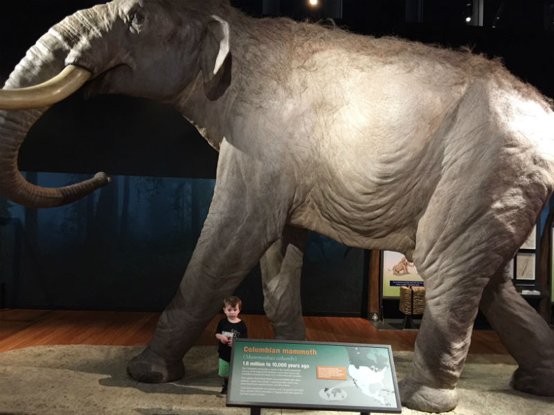 Alexander looks tiny compared to the Colombian Mammoth at The Australian Museum.