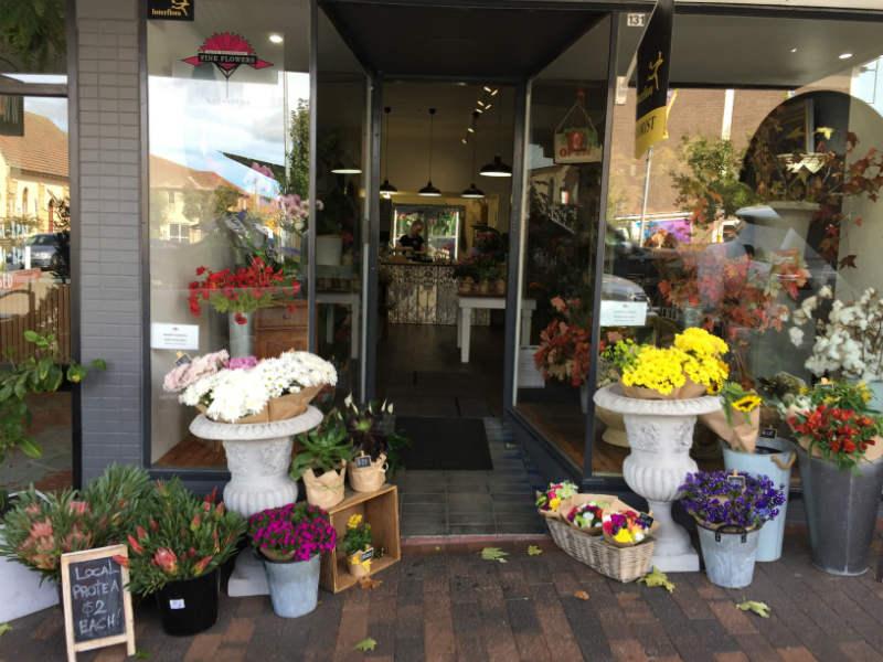 Fine Flowers at Katoomba.