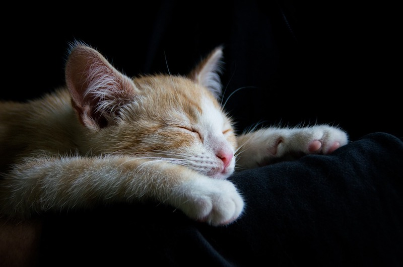 I want to sleep like this cat. Wish I could just curl up when I wanted and have a sleep.