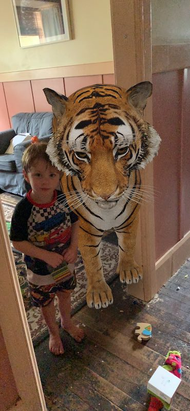 How about a selfie with a tiger? With Google 3D Animals you can have one too!