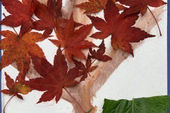 Create Autumn & Winter Pictures
